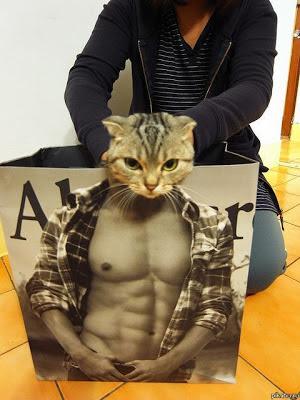 Katzen Bilder mit Menschenkörper