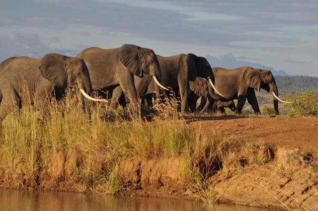 """Đã đến thiên đường sa mạc Namibia, bạn không thể bỏ qua cơ hội đến thăm các động vật hoang dã hay một lần tiếp xúc gần với nó. Khu bảo tồn động vật hoang dã Harnas là một nơi lý tưởng để các bạn """"chào hỏi"""" những loài to lớn và hung tợn. Nó đặc biệt được xây dựng bởi một đôi vợ chồng yêu động vật, họ dùng nông trường làm đất sinh sống cho các loài vật hoang dã cũng như trả tự do cho chúng. Tại đây, bạn có thể theo dân địa phương nhìn ngắm sư tử ở cự li gần, cho chúng ăn và ngắm hoàng hôn…cùng chúng."""