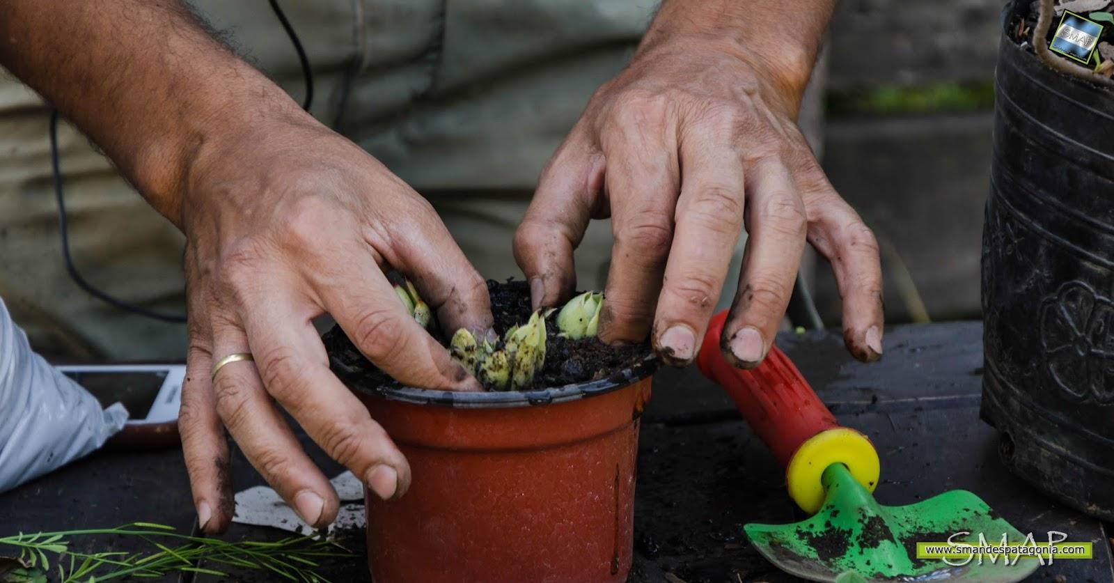 Aljaba reproduccion asexual de las plantas