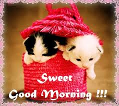 Best sweet good morning photos wallpaper for WhatsApp