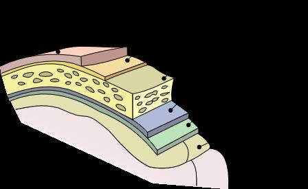 anatomie système nerveux méninges infirmier
