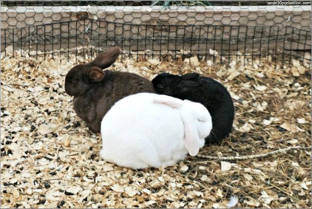 Animales en la Tendercrop Farm, Newbury