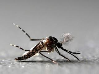 Paraíba investiga 10 óbitos por dengue notificados de janeiro a abril de 2019