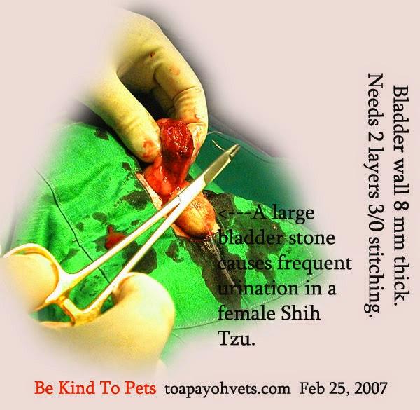 Veterinary And Travel Stories 1394 Video Urolithiasis