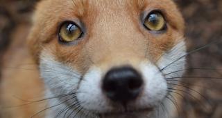 Τέλος εποχής για τη γούνα – Η Νορβηγία κλείνει και απαγορεύει τις φάρμες εκτροφής
