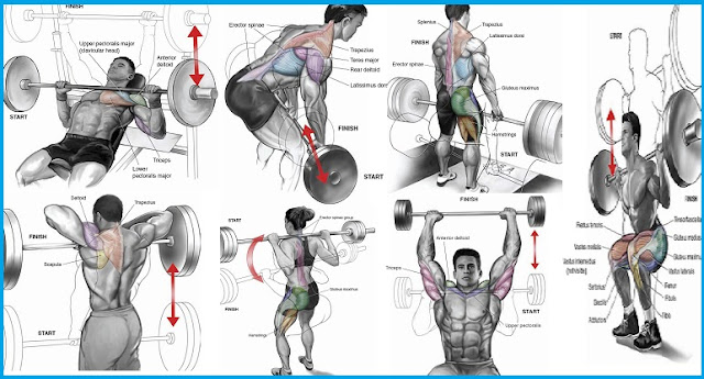Barbell Exercises That Suit Beginners - all-bodybuilding.com