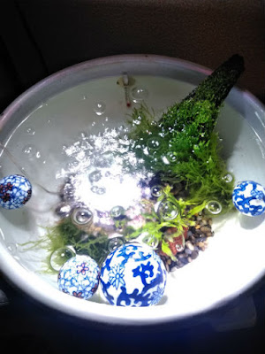 揚水前の睡蓮鉢