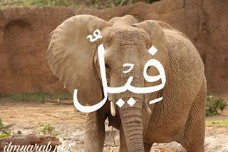kosakata bahasa arab tentang nama nama hewan