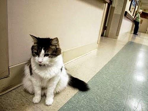 gato sabe quem vai morrer