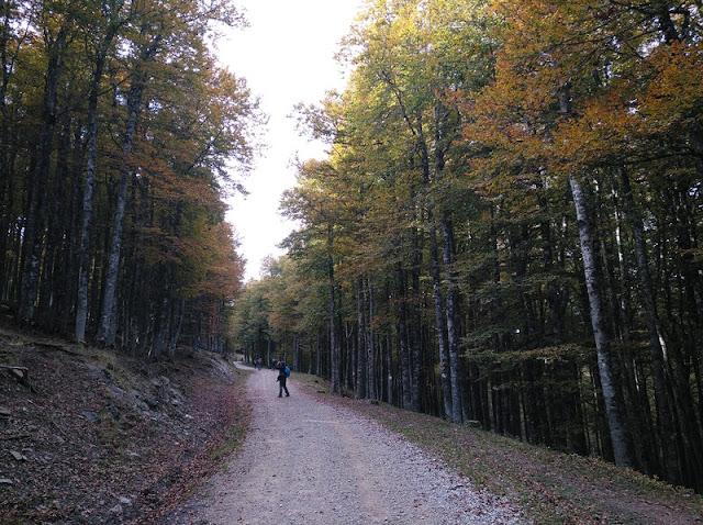 Ruta de los Salacenos en el alto de Osaba, repleto de hayas y abetos