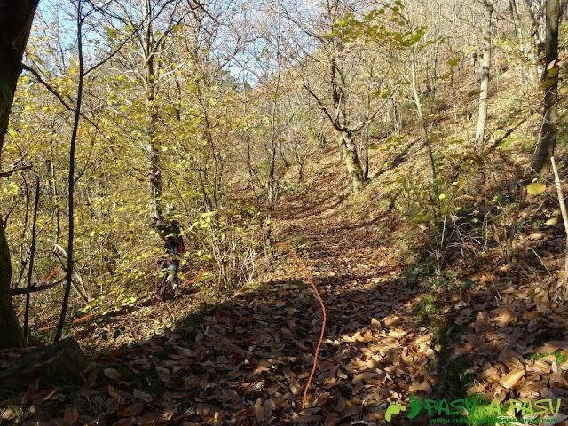 Dolmen de Merillés: Bosque bajando a Tuña desde La Faxa