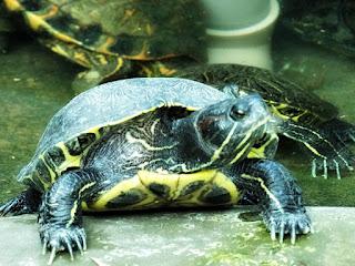 O Tanque das Tartarugas no Parque Zoológico de Sapucaia