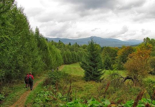 Wychodzimy z lasu na otwarty teren.