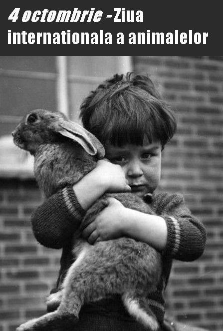 cautand om care iube te animalele)
