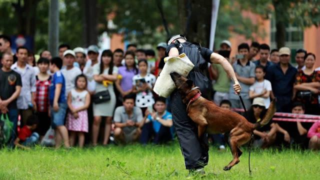 Chó Cảnh sát Hoàng gia Hà Lan