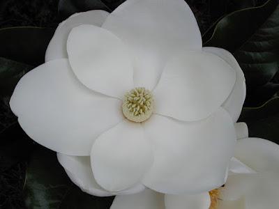 http://www.reddancerstudio.com/2016/10/flower-friday-atlanta-georgia-usa.html