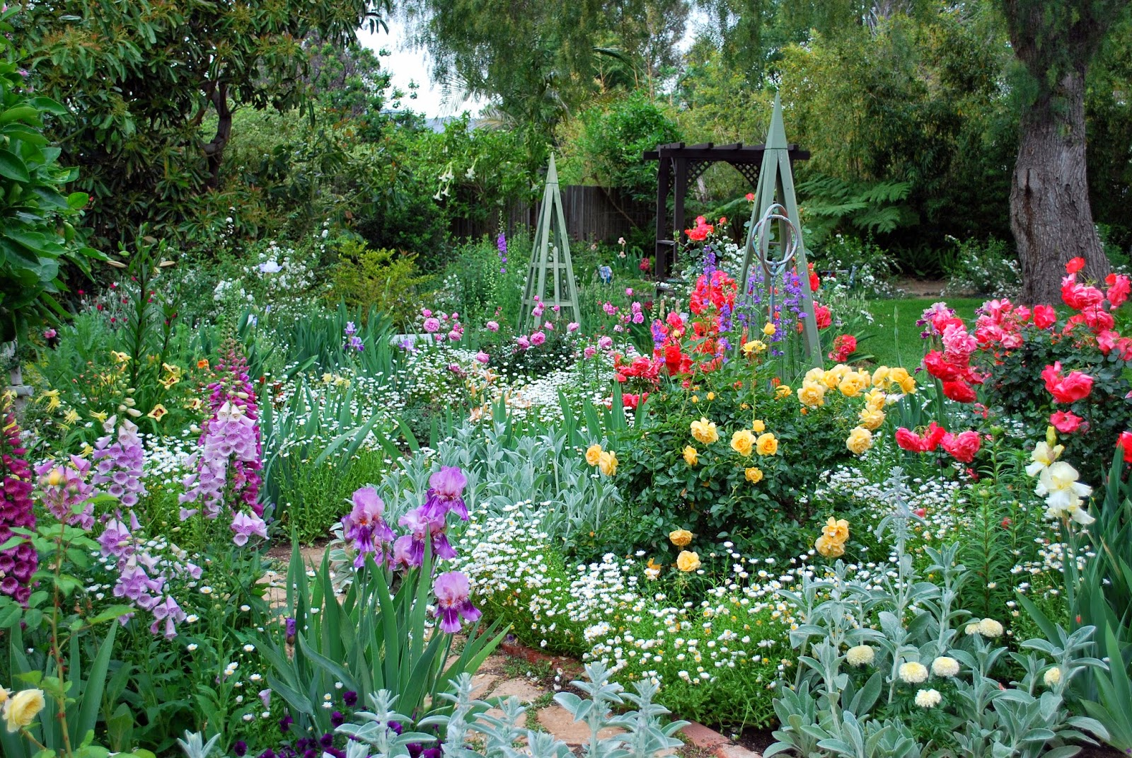 World of irises how deep should i plant my irises for What should i plant in my garden
