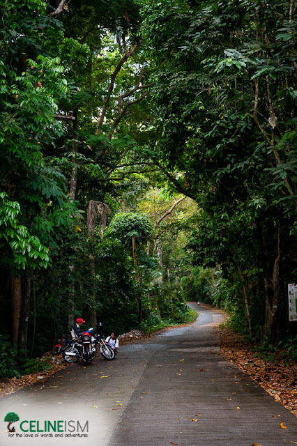 uplb trail to makiling
