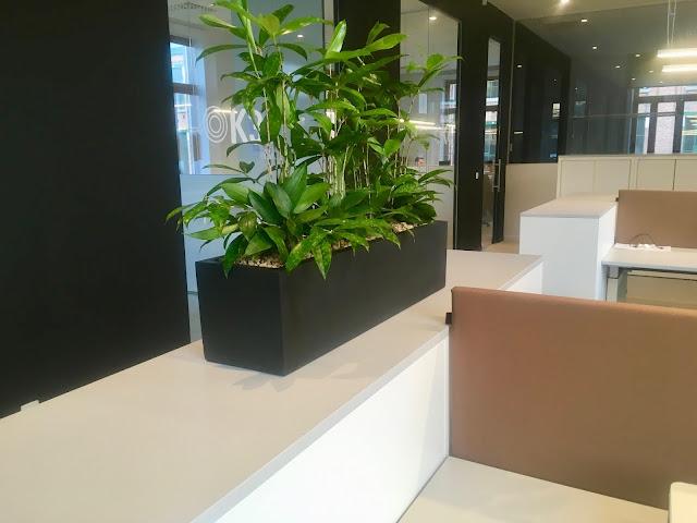 Planten in een kleine zwarte plantenbak voor kantoor met een hippe stijlvolle look huren of kopen met of zonder onderhoudscontract