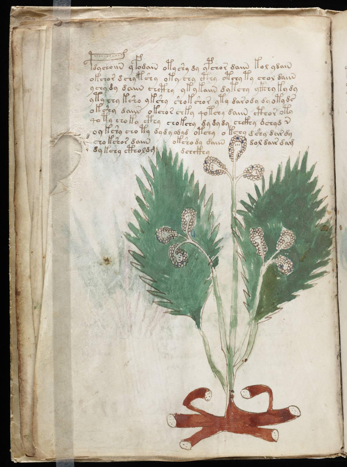 manuscrito028