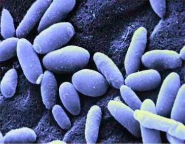 Candida albicans bucala tratament naturist