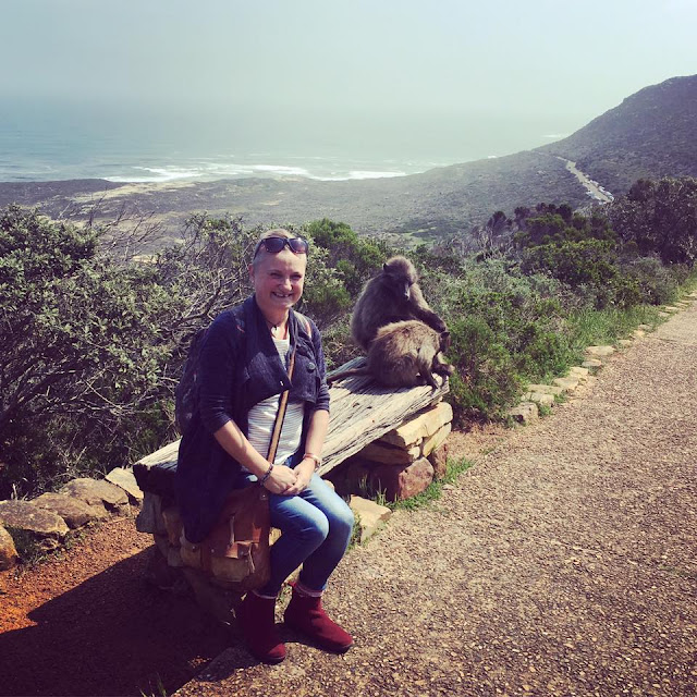Baboons at Cape Point South Africa