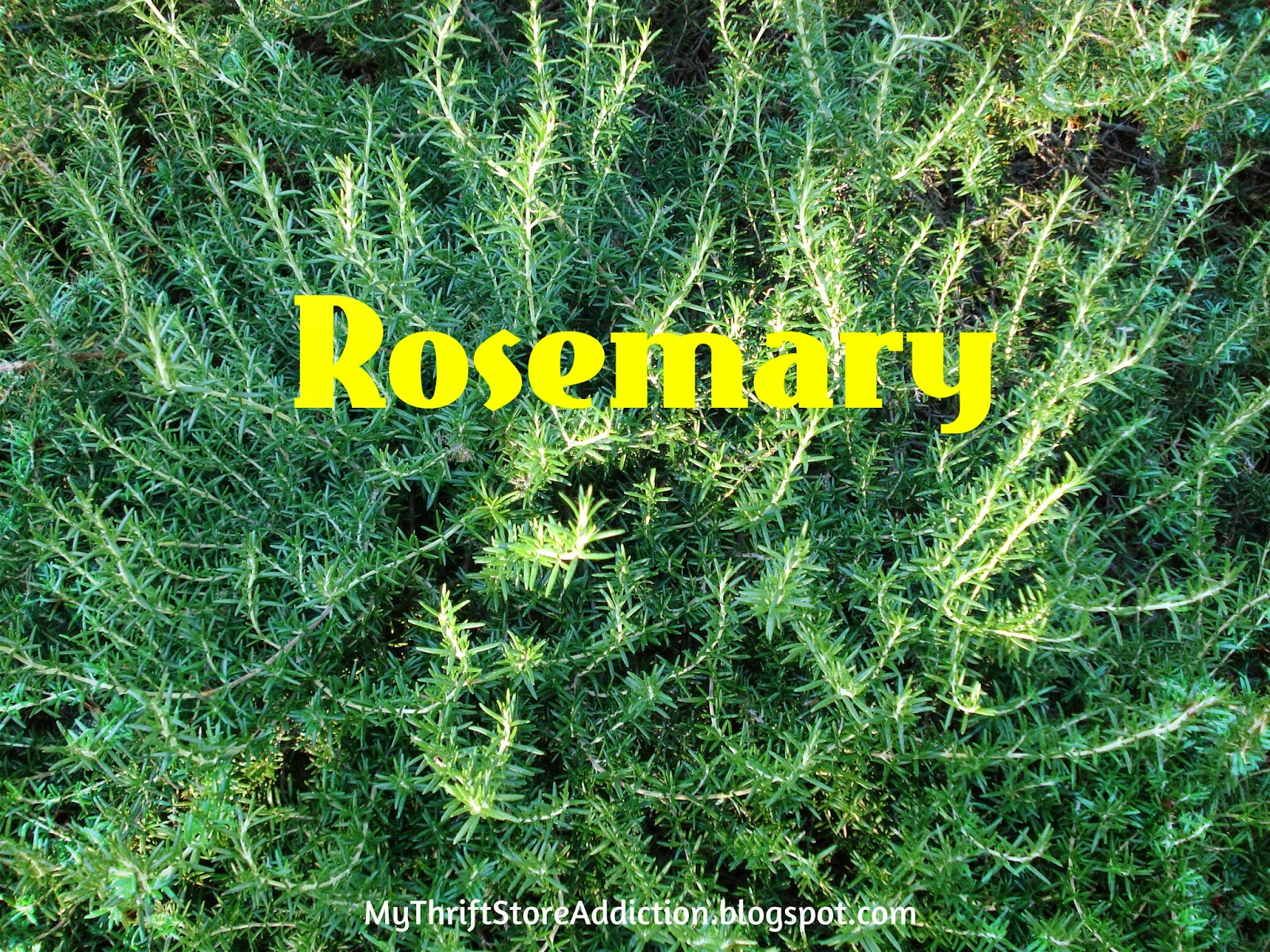 Health benefits of herbs rosemary