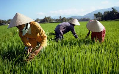 Non La symbolizes Vietnamese beauty and charm