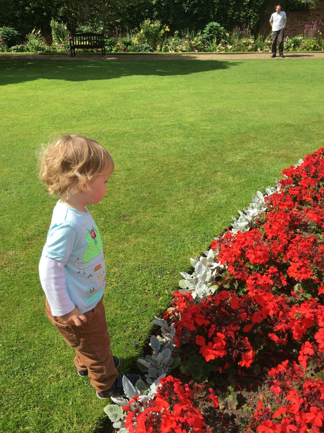toddler-stood-by-red-flowers