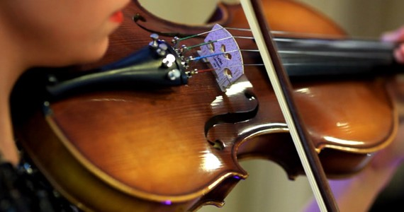 VIOLIN: All you need to know