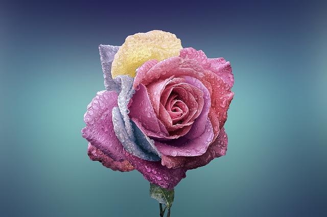 hoa đẹp nhất thế giới 11