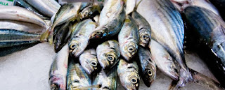 We Could Be Eating Toxic Fish 2