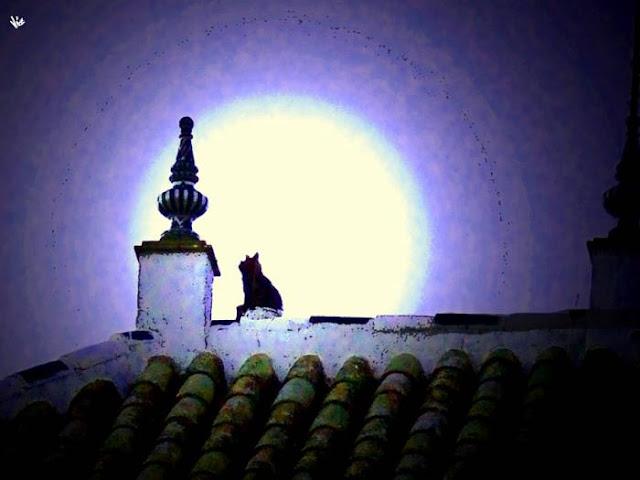 Resultado de imagen de gato sobre un tejado