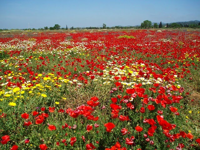 pradera flores