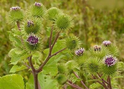 Şifalı Bitkiler ve Faydaları