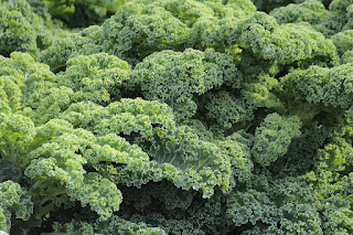 Kale for vitamin k