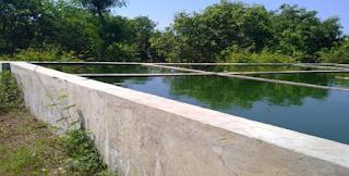 Pematang kolam