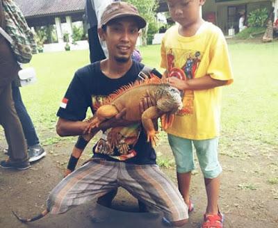 Cara Menjinakkan Iguana dengan Cepat dan Mudah