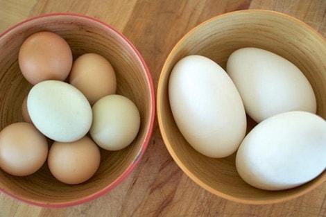 Tìm hiểu việc ăn trứng ngỗng khi mang thai để con thông minh hơn