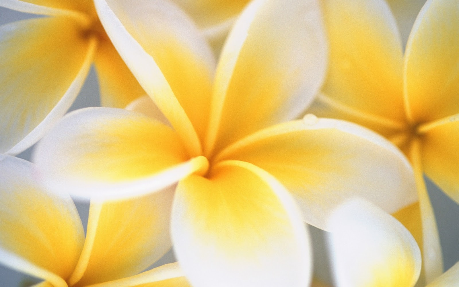 cool wallpapers: Cool Flower Wallpapers