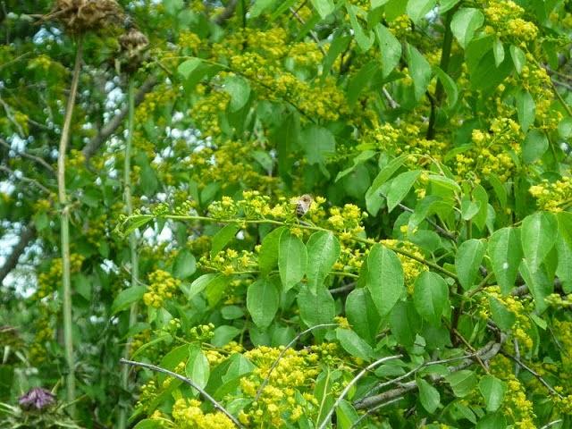 Μελισσοκομικοί χειρισμοί Μαΐου