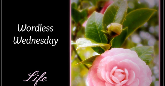 Wordless Wednesday, July 19 {with link up}