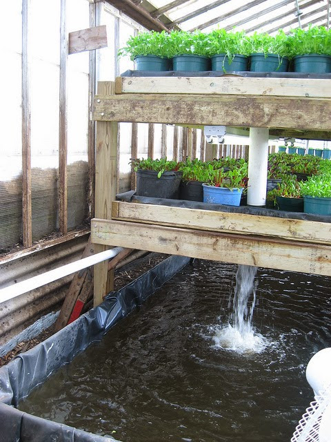Aquaponics Systems - How To Choose The Proper Size Unit
