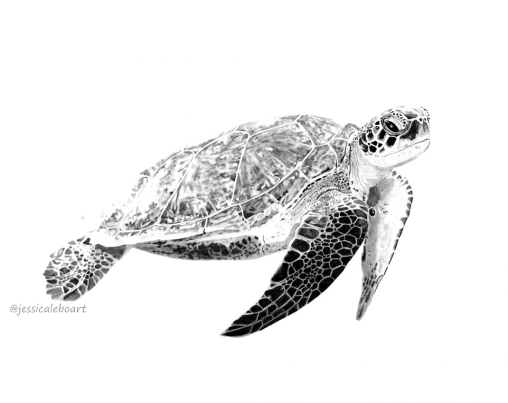 Turtle pencil drawing wallpapers library