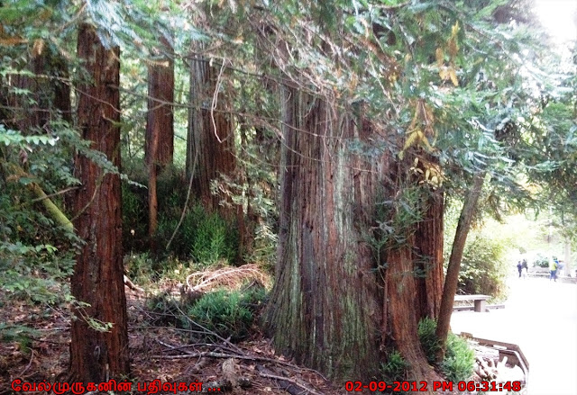 SFO Redwood forest