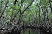 Hutan Bakau (Mangrove)