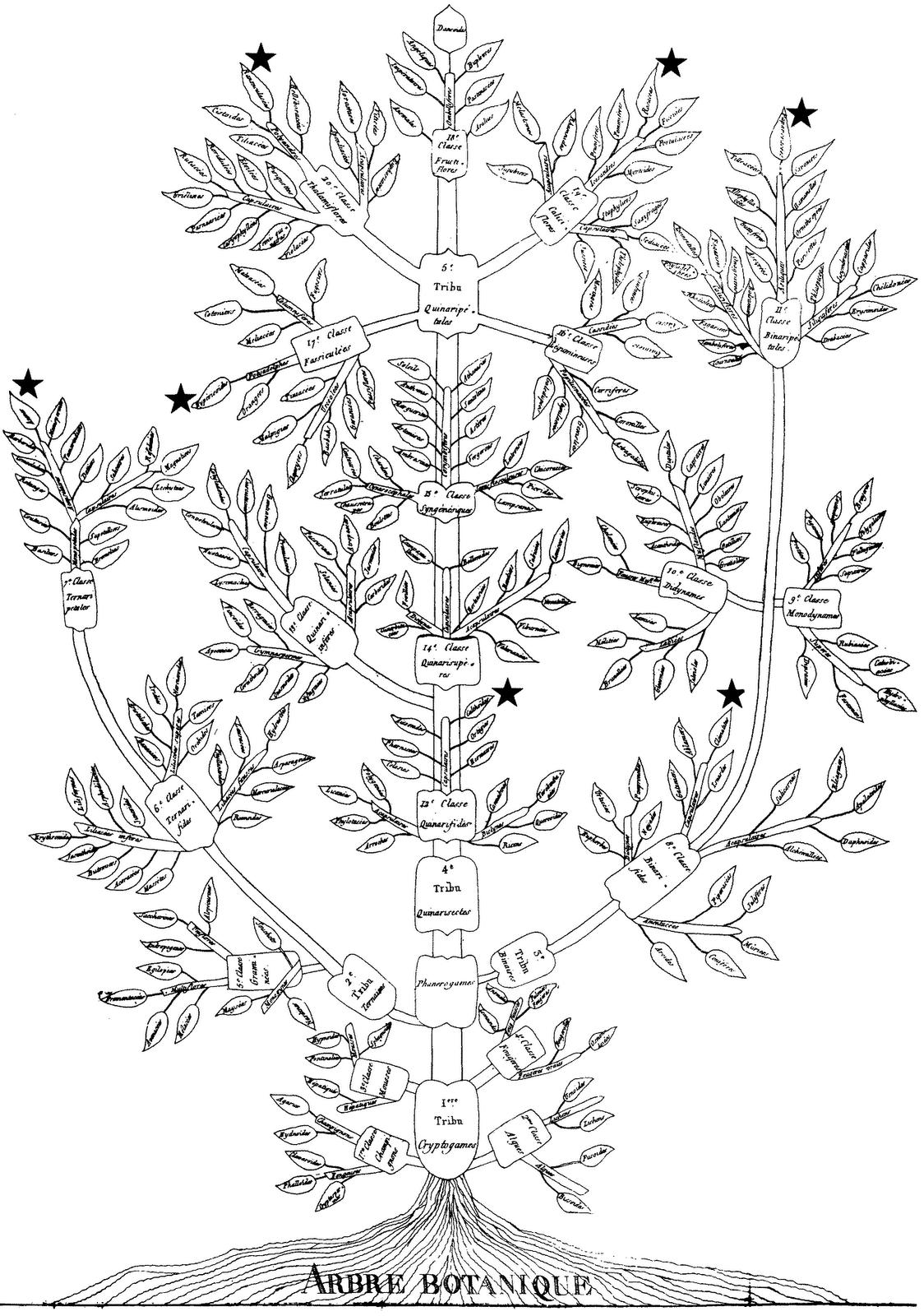 The Genealogical World Of Phylogenetic Networks