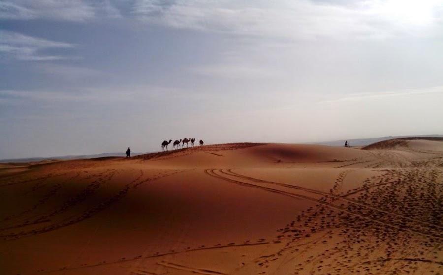 Camellos-en-el-desierto-del-Sahara