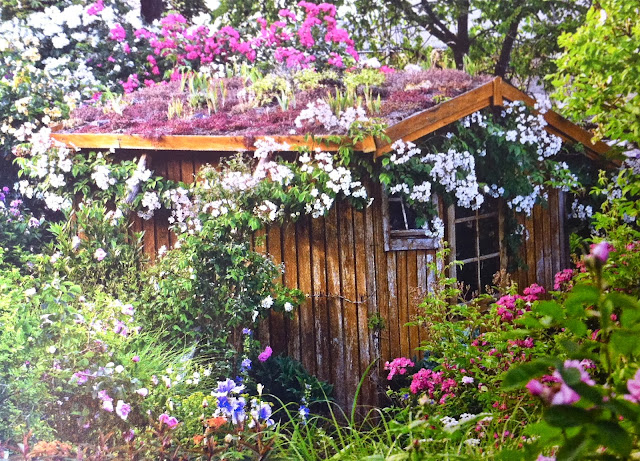 my idea of the perfect garden shed and possibly a studio though far too dark