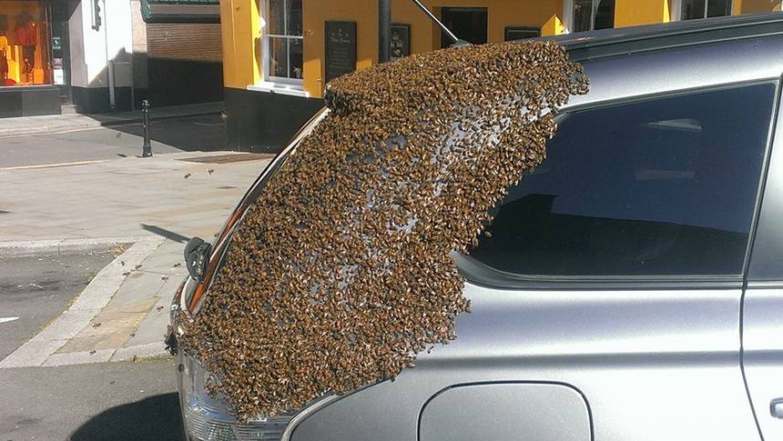 Swarm Of 20,000 Bees Was Following A Car For Two Days To Rescue Their Queen